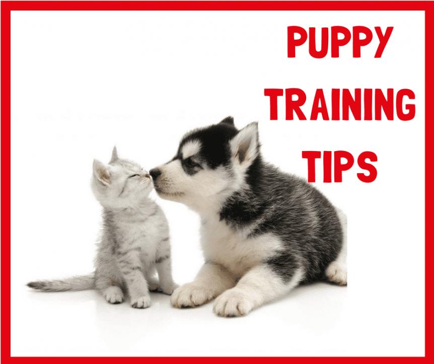 Dog Training Puppy trainer potty Obedience Dog Training Agility Sligo Leitrim Donegal Ireland Mayo Positive