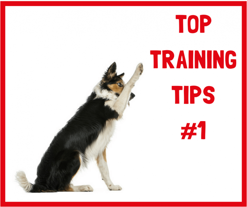 Dog Training Puppy trainer potty Obedience Dog Training Agility Sligo Leitrim Donegal Ireland Mayo Positive