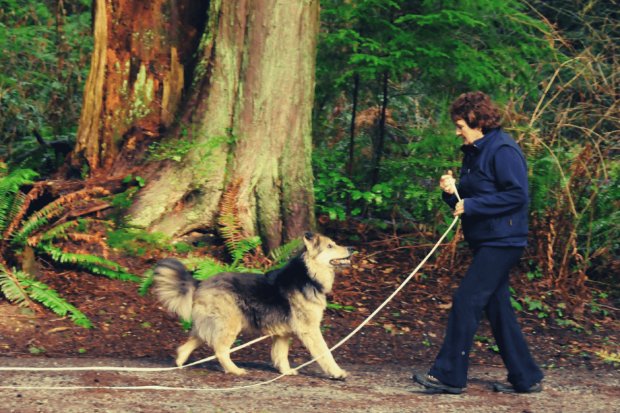 Dog Training Puppy Ireland Sligo Leitrim Roscommon Donegal Puppy Obedience not to jump teach Pulling biting kids